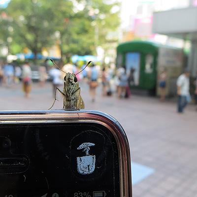 8月16日(金)の渋谷109前交差点_b0056983_1121519.jpg