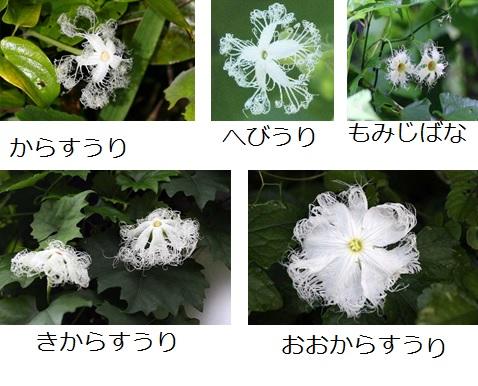 花が開くのは夜?_e0305388_1036440.jpg