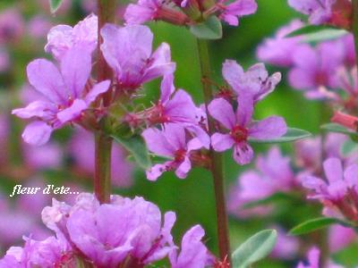 晩夏を感じる花たち・・・♪_c0098807_19255485.jpg