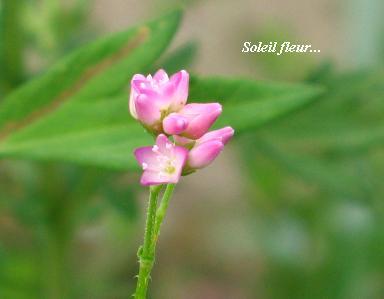 晩夏を感じる花たち・・・♪_c0098807_19433276.jpg