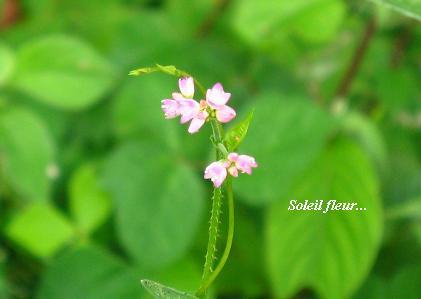 晩夏を感じる花たち・・・♪_c0098807_19475375.jpg