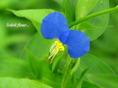 晩夏を感じる花たち・・・♪_c0098807_19534738.jpg