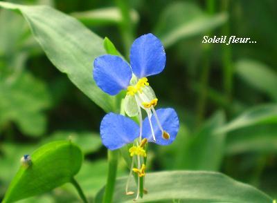 晩夏を感じる花たち・・・♪_c0098807_19543931.jpg