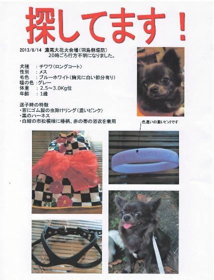 迷い犬_e0236430_10494758.jpg