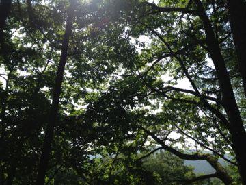 飛騨の山小屋 清水牧場_e0134337_11575387.jpg