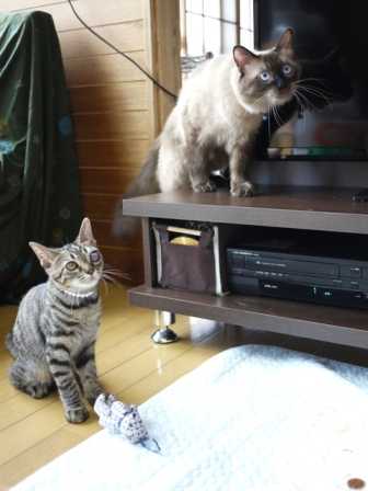 猫のお友だち 矢作くんモカバナーヌ田中くん藪裏こうじくん編。_a0143140_0405560.jpg
