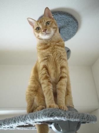 猫のお友だち ちゃーくんちょびくんペコちゃん編。_a0143140_0595735.jpg