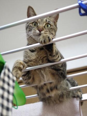 猫のお友だち ちゃーくんちょびくんペコちゃん編。_a0143140_113457.jpg