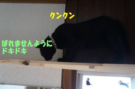 d0013645_16315964.jpg