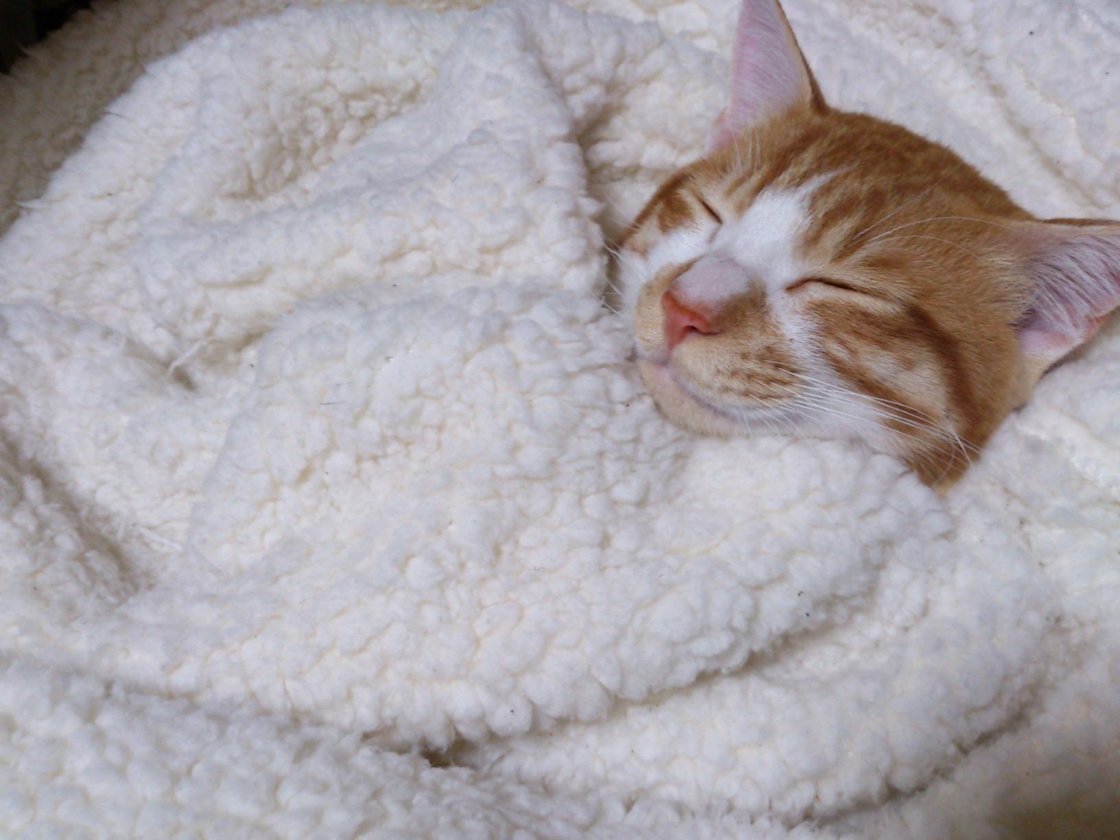 真面目な猫ブログ_c0159762_14533922.jpg