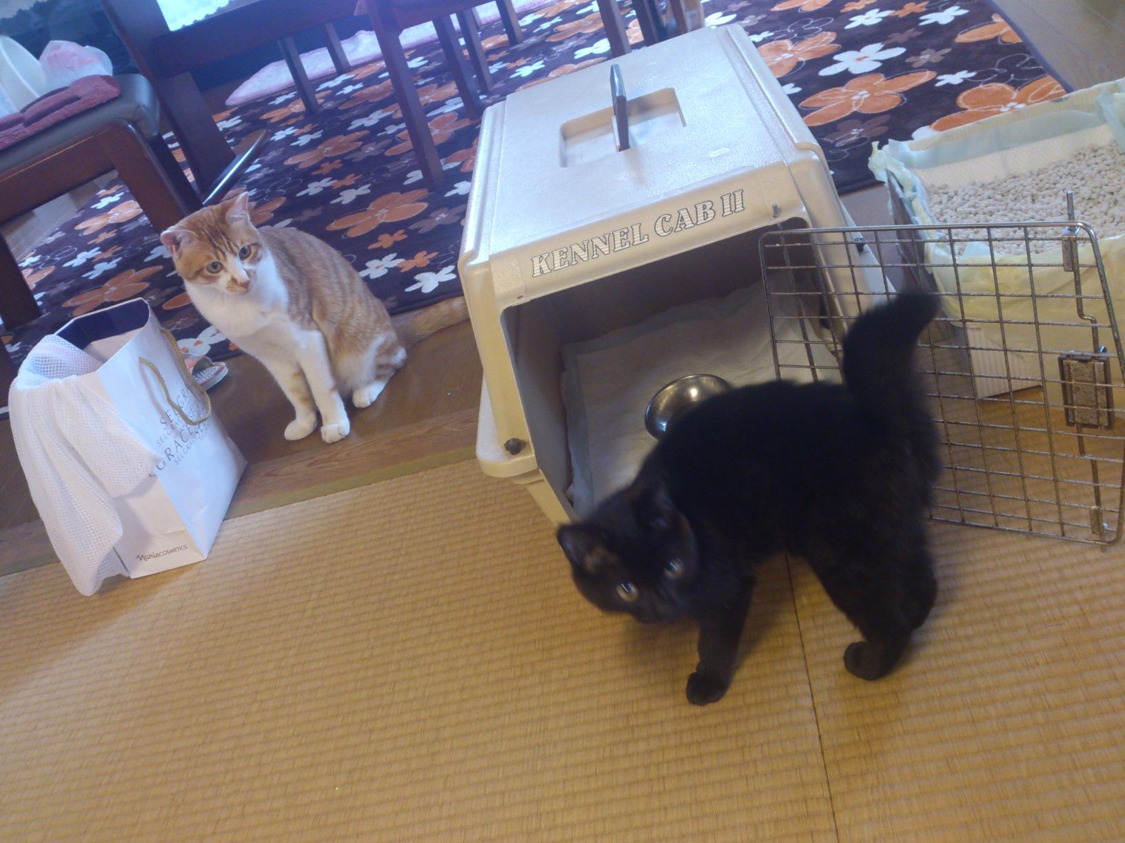 真面目な猫ブログ_c0159762_1514484.jpg