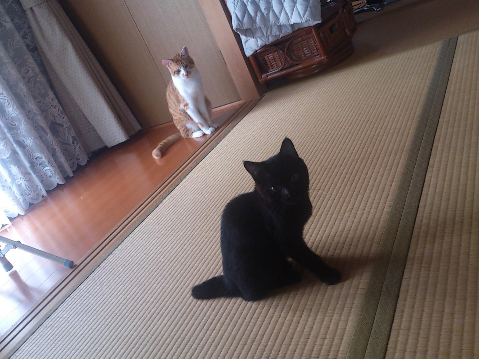 真面目な猫ブログ_c0159762_1523761.jpg