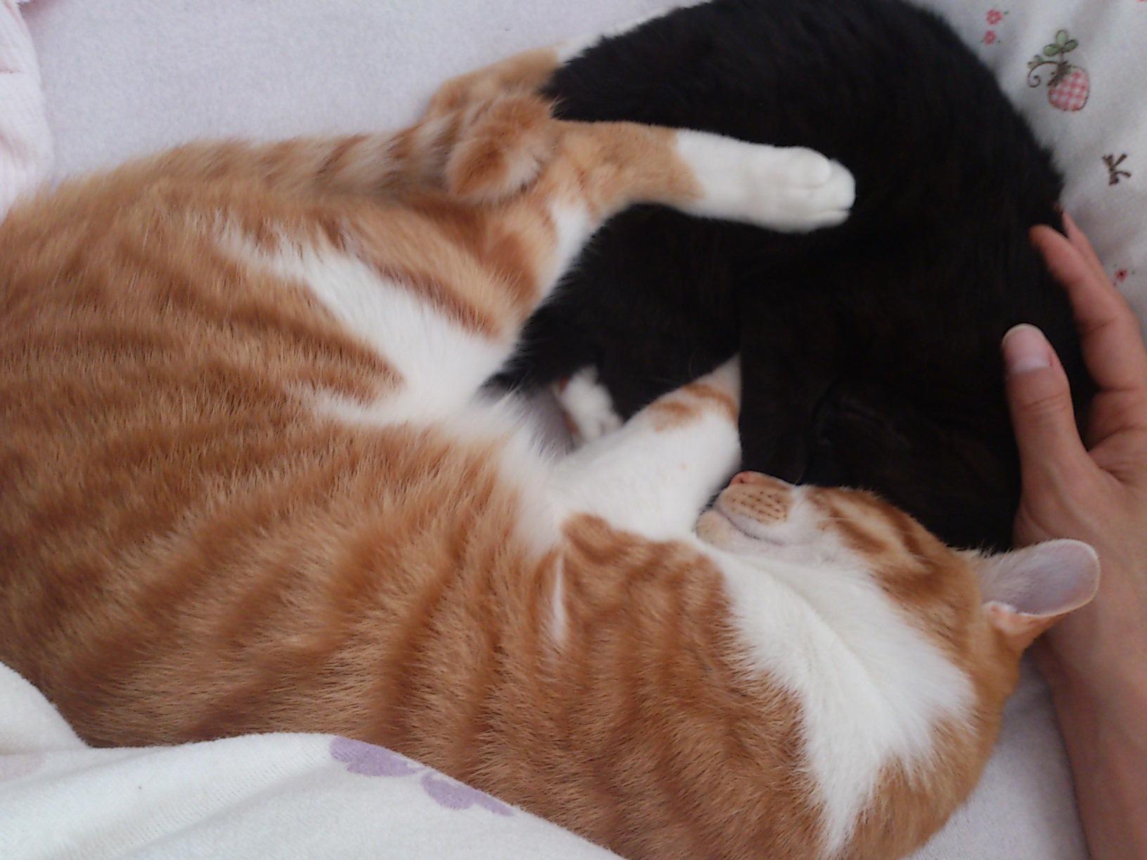 真面目な猫ブログ_c0159762_15503217.jpg