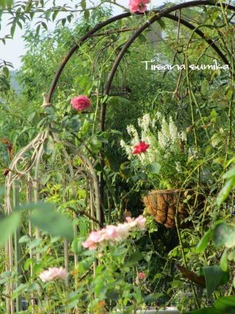 残暑に咲く花たち♪_a0243064_826226.jpg