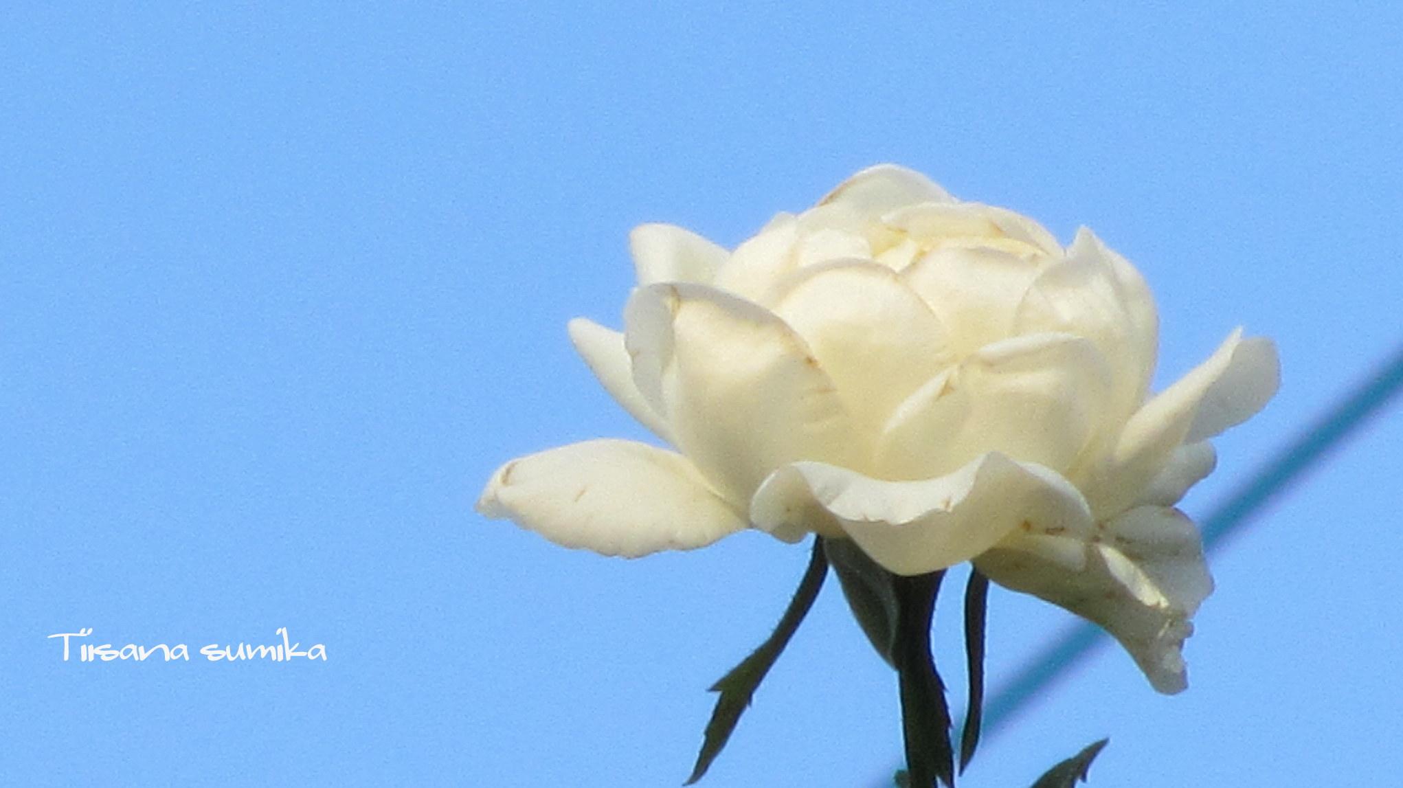 残暑に咲く花たち♪_a0243064_840729.jpg