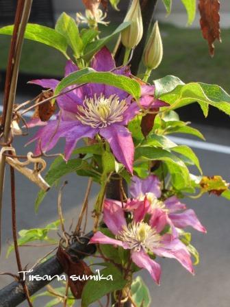 残暑に咲く花たち♪_a0243064_8415524.jpg
