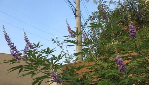 残暑に咲く花たち♪_a0243064_8463282.jpg