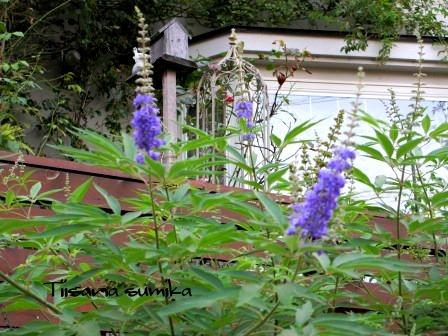残暑に咲く花たち♪_a0243064_8483822.jpg