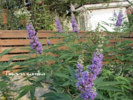 残暑に咲く花たち♪_a0243064_8494100.jpg