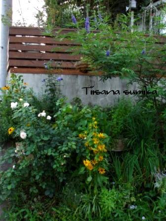 残暑に咲く花たち♪_a0243064_8551598.jpg
