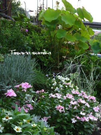 残暑に咲く花たち♪_a0243064_856140.jpg