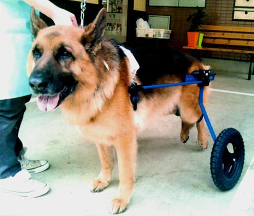 ある犬養いの話_d0290407_2233432.jpg
