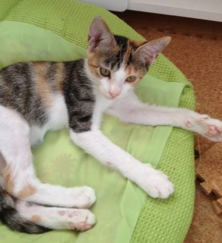 迷子猫 保護してます!_d0107809_1011711.jpg