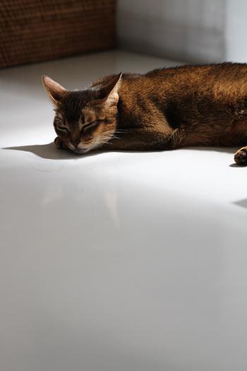 [猫的]寝ぼん_e0090124_23103472.jpg