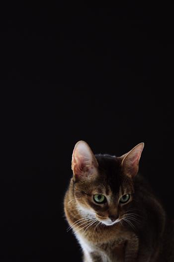 [猫的]BLACK series_e0090124_23131768.jpg