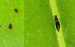 害虫王者ガイキング2013_f0108133_1614149.jpg