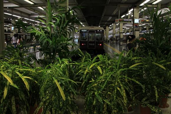 ジャングルの中で・・ 阪急7015F_d0202264_19395091.jpg