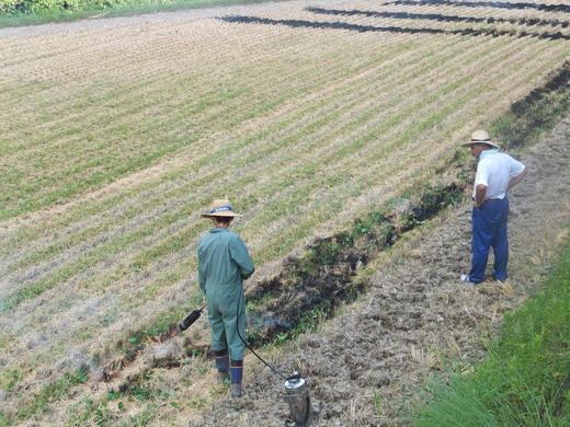 次の農作業_d0251679_2323272.jpg