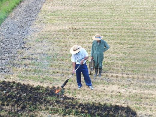 次の農作業_d0251679_23251054.jpg