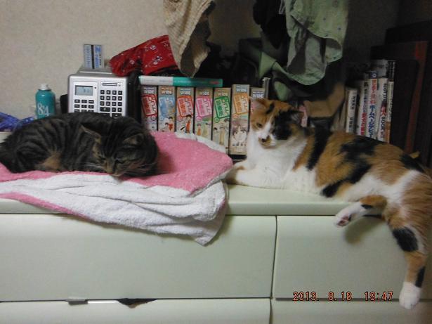きょうの猫達_b0112380_20571343.jpg
