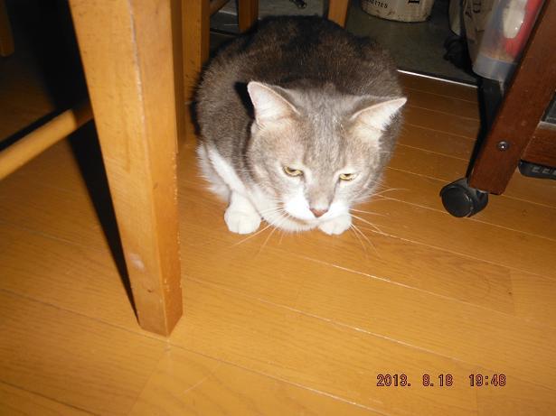 きょうの猫達_b0112380_20574913.jpg
