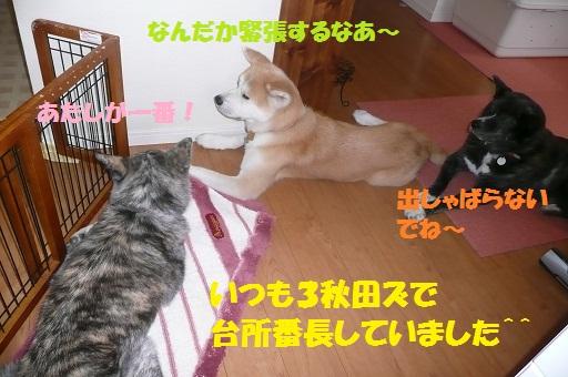 f0121712_17193057.jpg