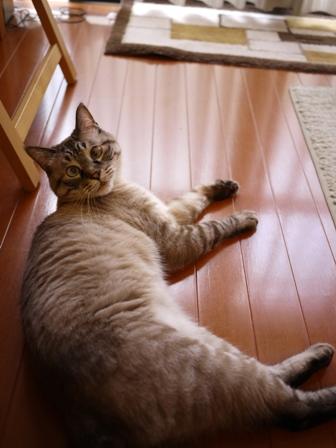猫のお友だち ギンくん編。_a0143140_0544436.jpg