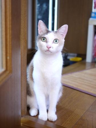 猫のお友だち イーラちゃんいなりちゃん編。_a0143140_057398.jpg