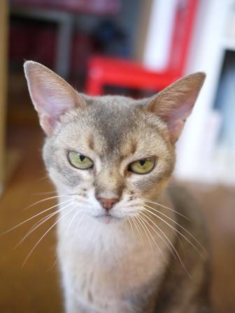 猫のお友だち イーラちゃんいなりちゃん編。_a0143140_0585672.jpg