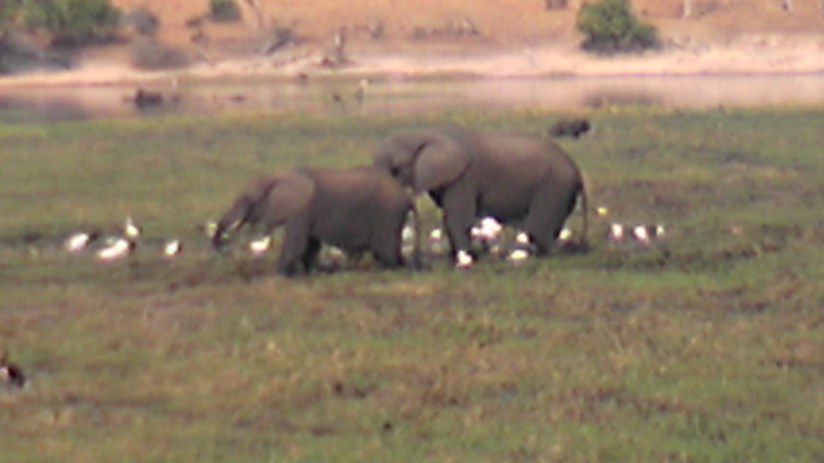 のあ526 アフリカからのメール♪_b0061261_20544015.png