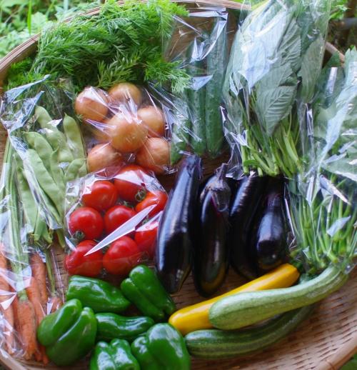 今週の野菜セット(8/20~8/24着)_c0110869_15255411.jpg