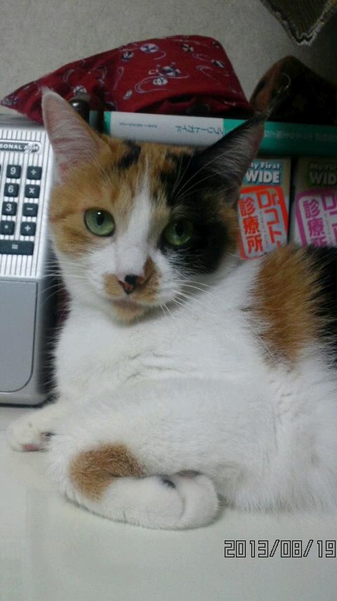 猫達_b0112380_21303021.jpg