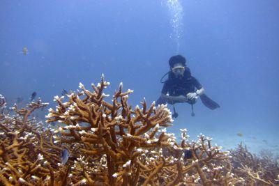青い海!!ラチャノイ島!!_f0144385_20363047.jpg