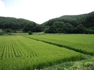 川内村の風景_d0027486_20252725.jpg