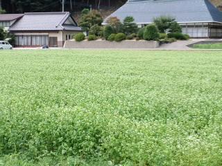 川内村の風景_d0027486_20261281.jpg