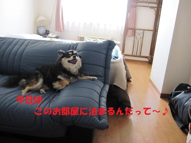 b0150088_10114895.jpg