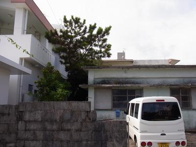 沖縄、今年も、蝉の鳴き声が聞こえない_a0122098_1021691.jpg
