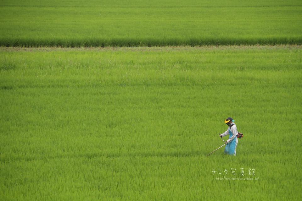 農作業_e0254298_19173418.jpg