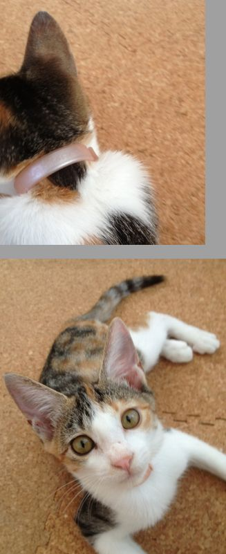 迷子猫 保護してます_d0107809_9563994.jpg