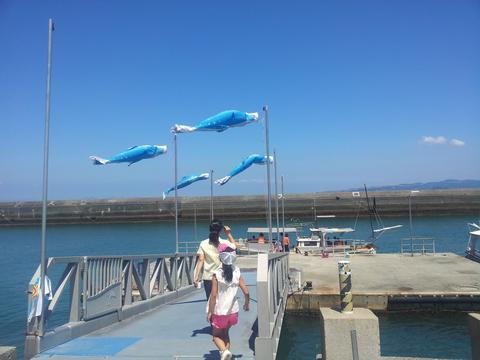イルカを見に天草へ!_b0228113_15311271.jpg